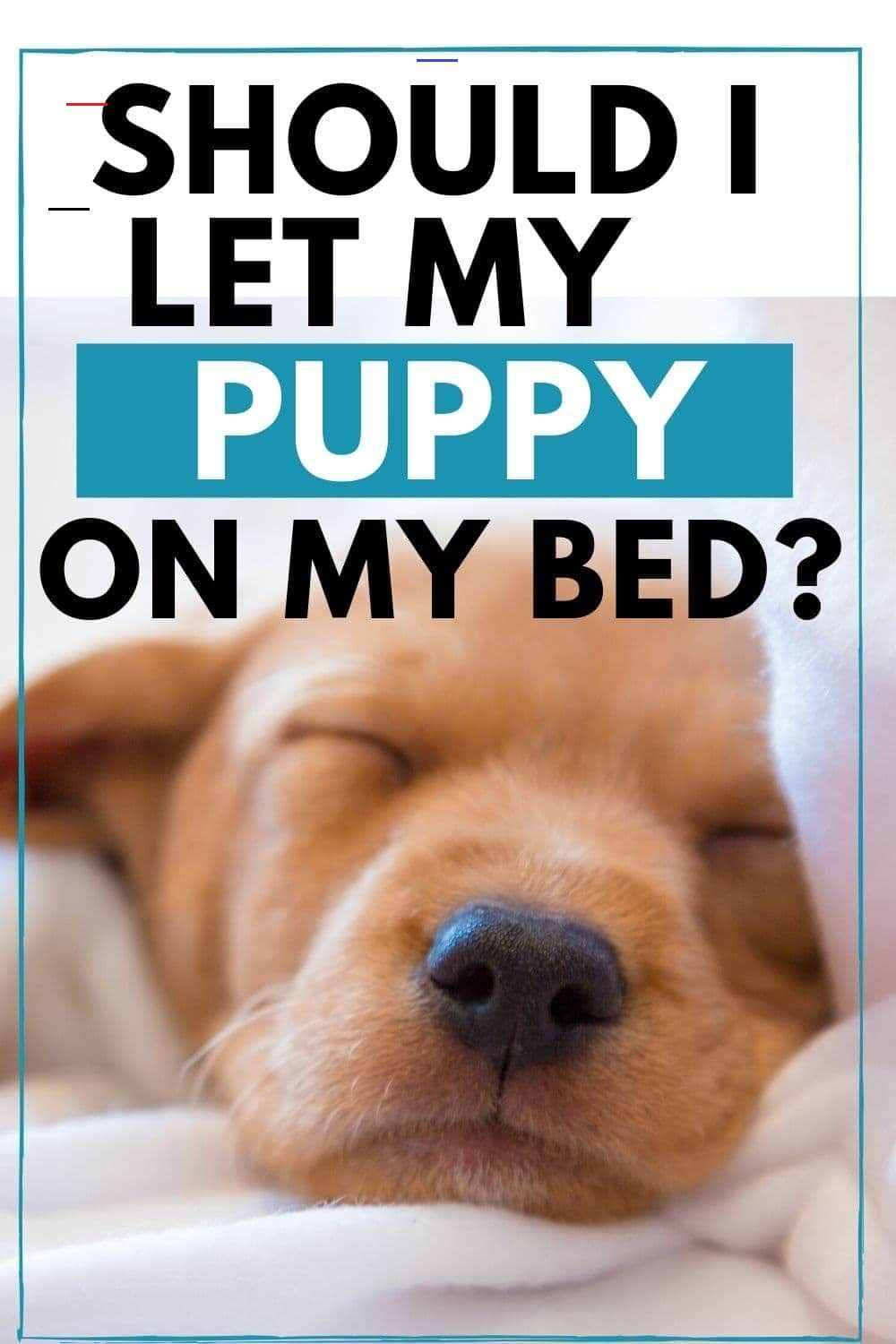 5f3b91bc943cb0e1679f7bba70808cc9 - How Do I Get My Puppy To Sleep In His Bed