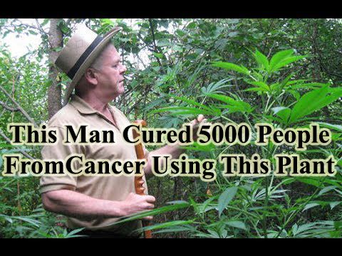 The uses of cannabis to cure cancer is known all over the world and this man really proves it http://www.extremenaturalhealthnews.com/this-man-cured-5000-people-from-cancer-using-this-plant/