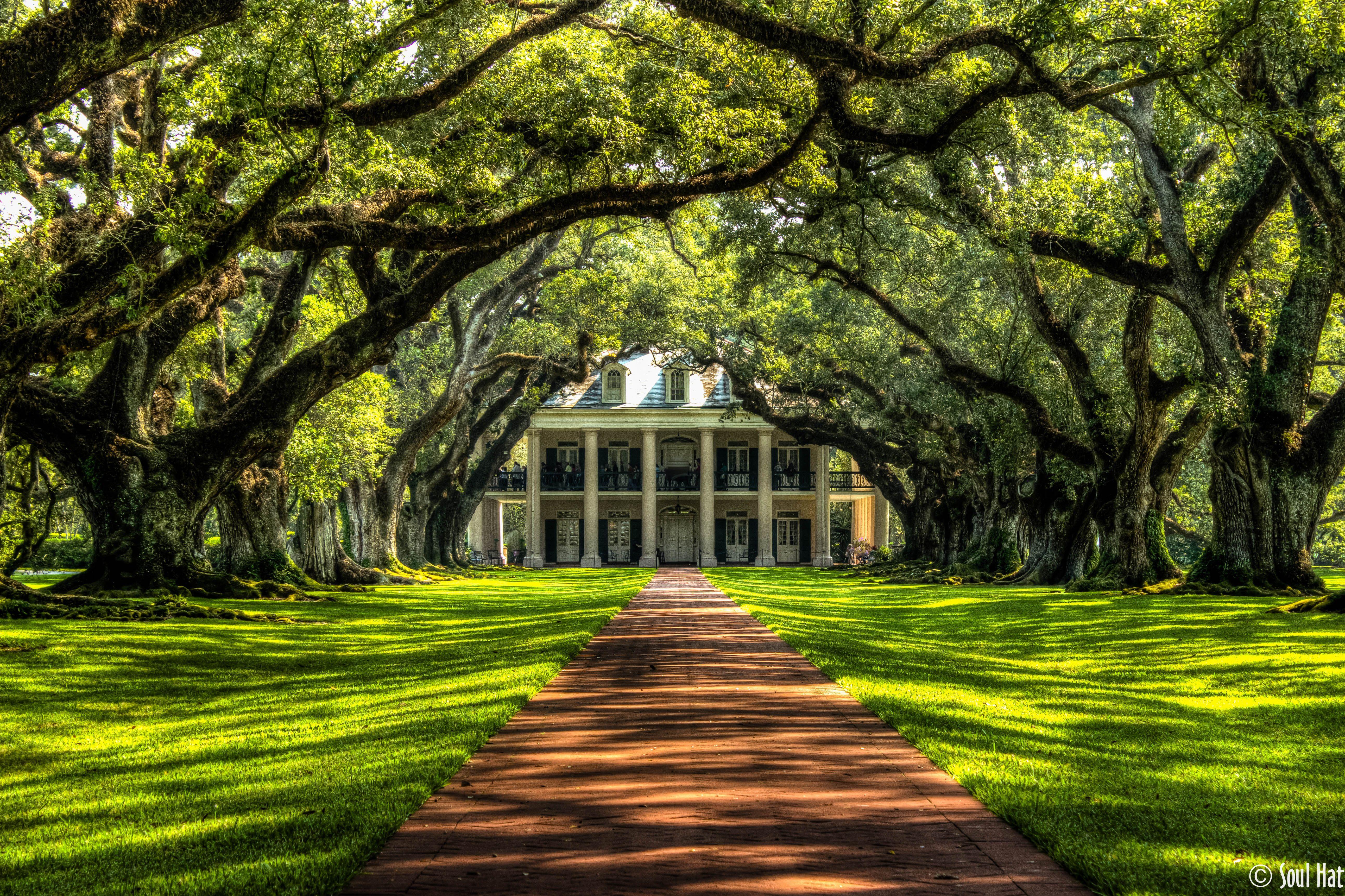 Oak Alley Plantation, Old South Images, Louisiana, Ancient Live Oaks