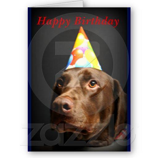 Happy Birthday Card Chocolate Lab Card Zazzle Com In 2021 Happy Birthday Cards Happy Birthday Greeting Card Happy Birthday
