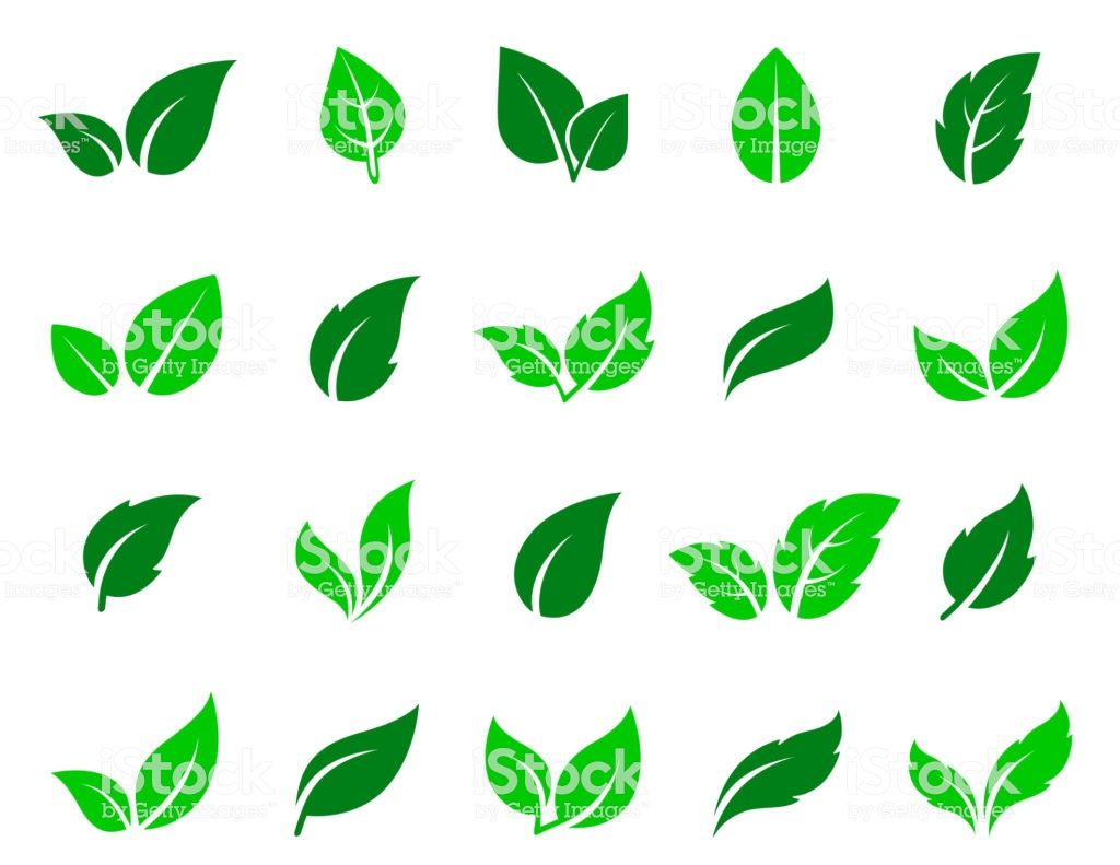 Green Leaves Icons Set On White Background Melhores Imagens Ideias