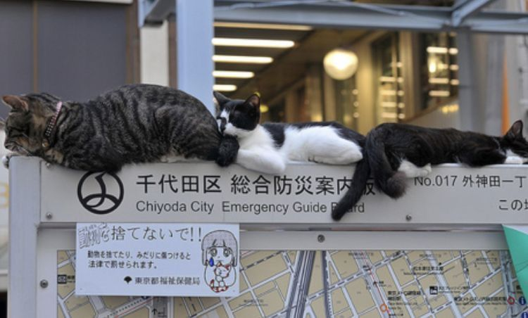 Pin by 𝗉𝗅𝗎𝗍𝗈 ⋆。˚ on luv4eva .* Cats, Chiyoda city, In