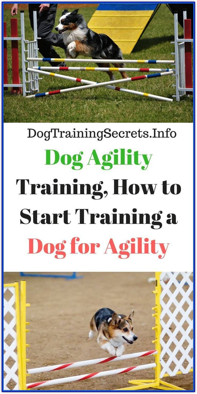 What To Do If You Need Aggressive Dog Training in 2020