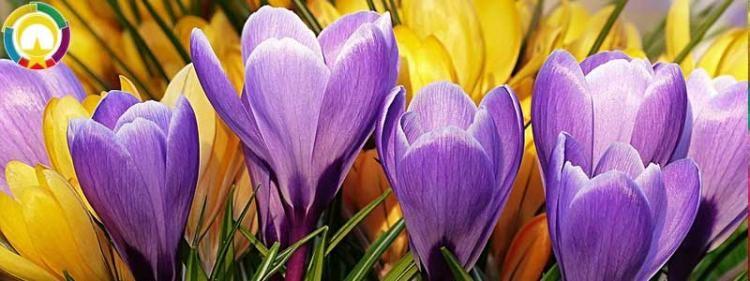 Baharda Açan çiçekler çiçeklerin Varlığı Her Zaman Güzeldir Ancak