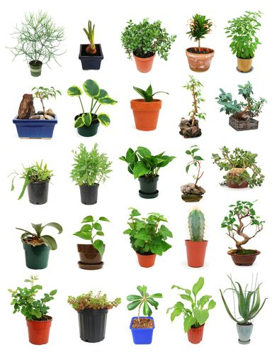 Pin on Yard and Garden Nasa Recommended Houseplants on