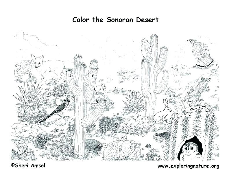 Biomes Coloring Pages Taiga Animals Coloring Sheet Coloring Pages