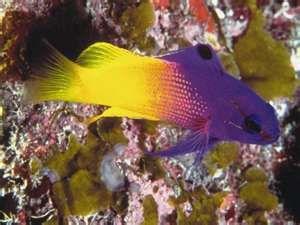 pretty tropical fish
