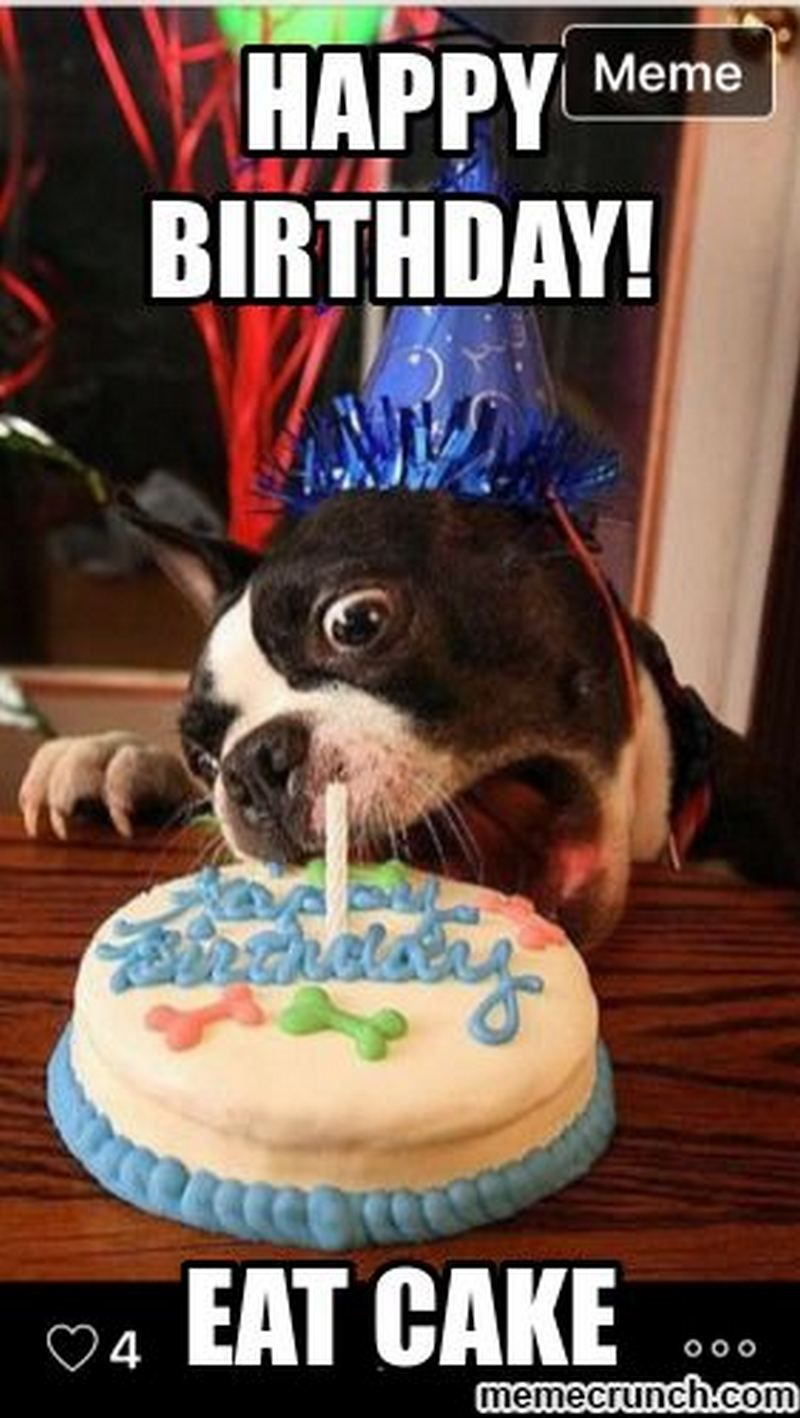 101 Funny Happy Birthday Dog Memes For Paw Lovers Everywhere Birthday Meme Dog Dog Birthday Wishes Happy Birthday Dog
