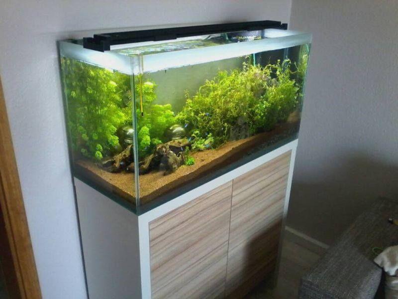 M s de 25 ideas incre bles sobre calentador acuario en for Calentador acuario