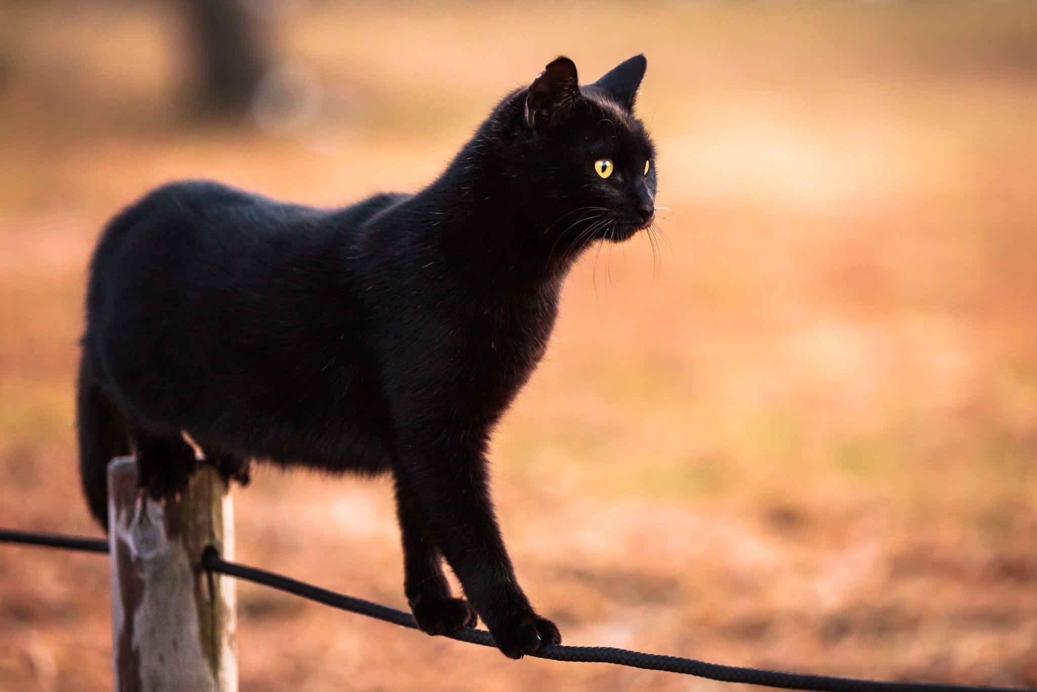 mustat poikaset squirts pullea musta lesbot
