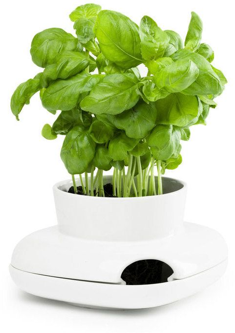 Dot Bo Flavor Herb Planter Large