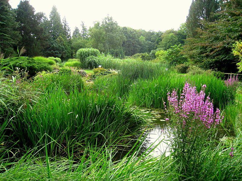 Botanischer Garten Der Tu Darmstadt Garten Darmstadt Nature