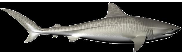 Mojo Items GREAT WHITE SHARK Replica 387120  ~ FREE SHIP//USA w// $25.