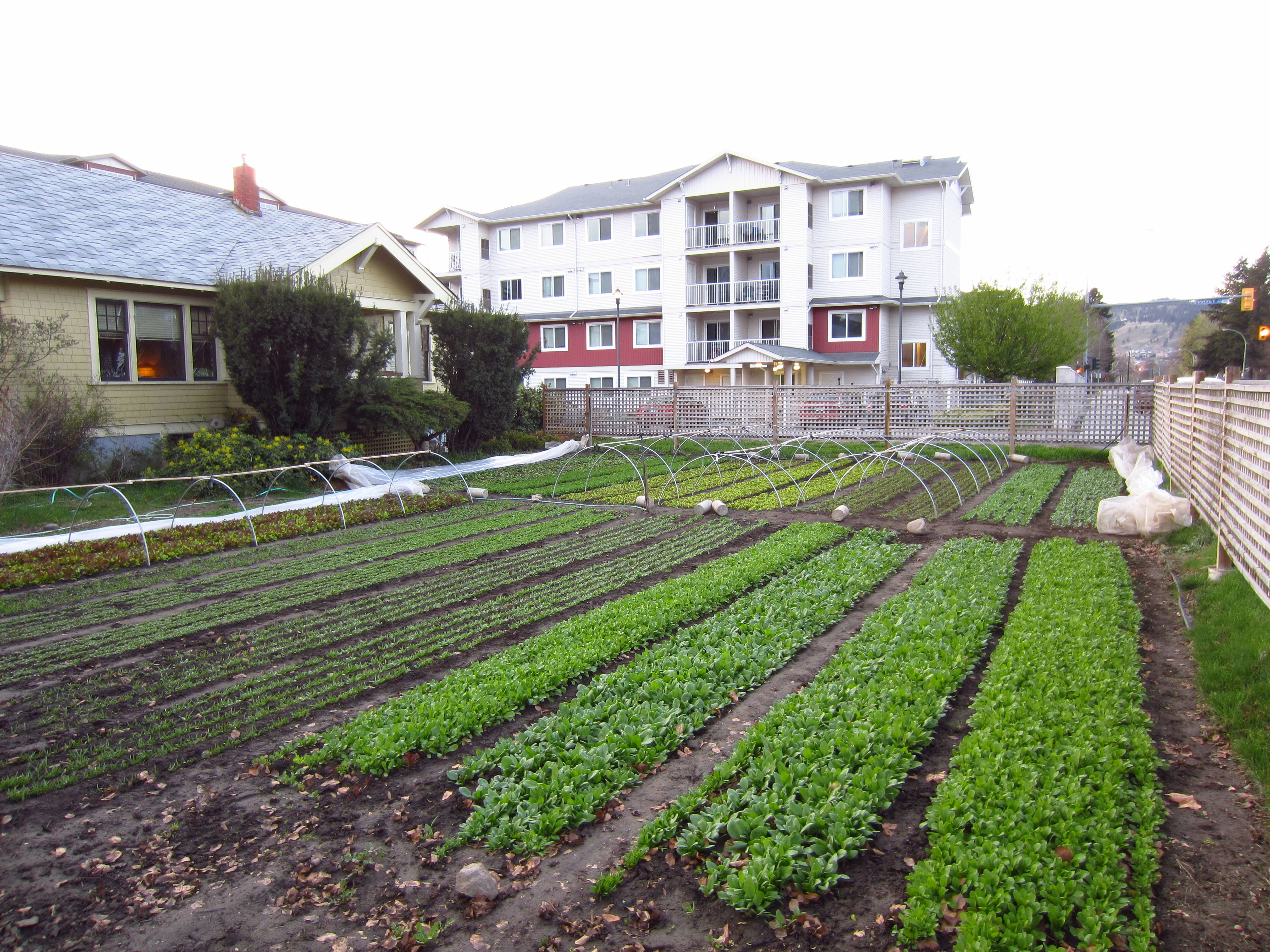 80k year farming on 1 3 acre square foot gardening for 1 acre farm layout