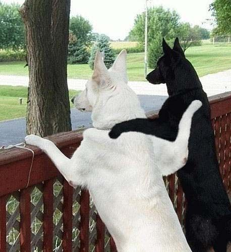"""Ebony and Ivory"""