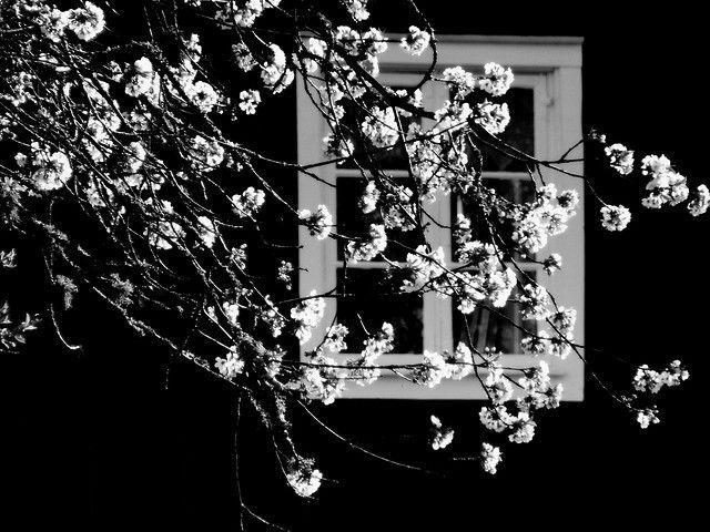 Em preto e branco