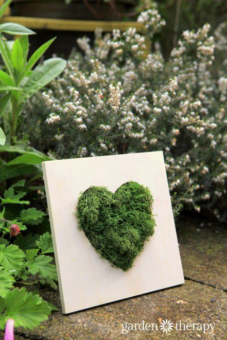 Make this Moss Heart Wall Art in 10 Minutes! is part of Heart wall art, Moss wall art, Garden wall art, Moss art, Moss decor, Trending crafts - This is a quick DIY that looks like it took months to grow! A moss heart in a wood picture frame makes for green art that requires no maintenance
