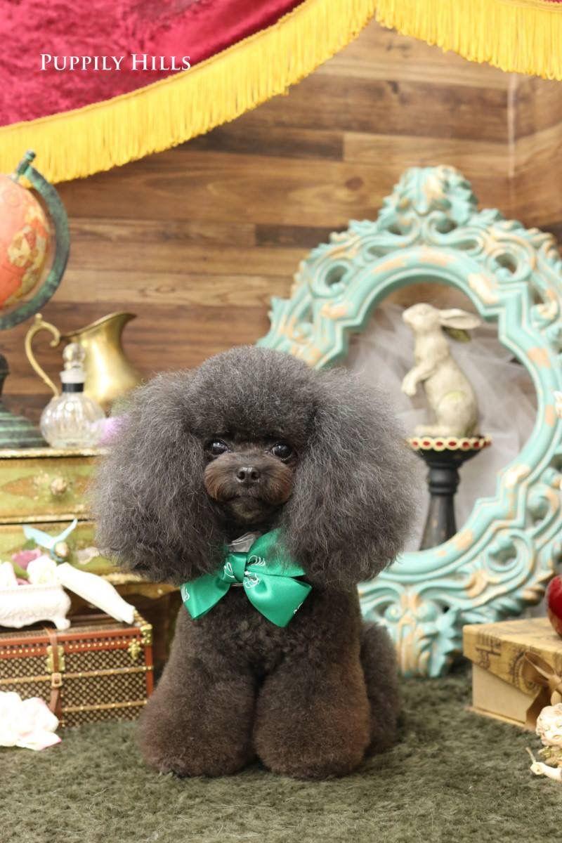 Pin de Amanda Eblin en Animals   Pinterest   Peluqueria canina ...