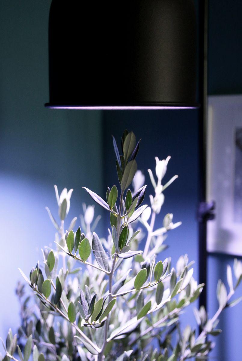 Mediterrane Kubelpflanzen Uberwintern Es Werde Licht Im Winterquartier Kubelpflanzen Kubelpflanzen Uberwintern Und Mediterrane Pflanzen