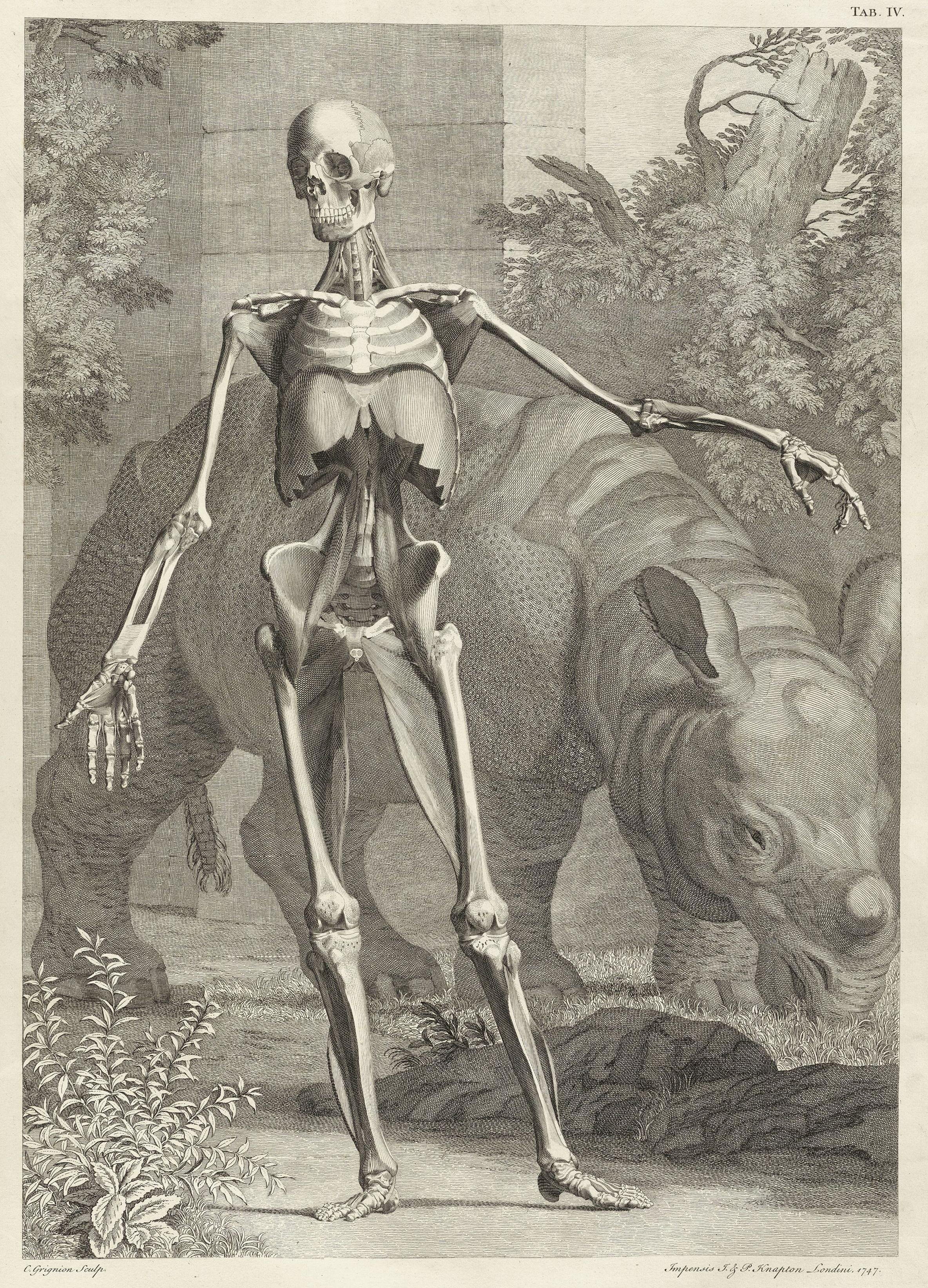 Clara_Rhinoceros_from_Bernhard_Siegfried_Albinus_TAB_IV_-_1749.jpg ...