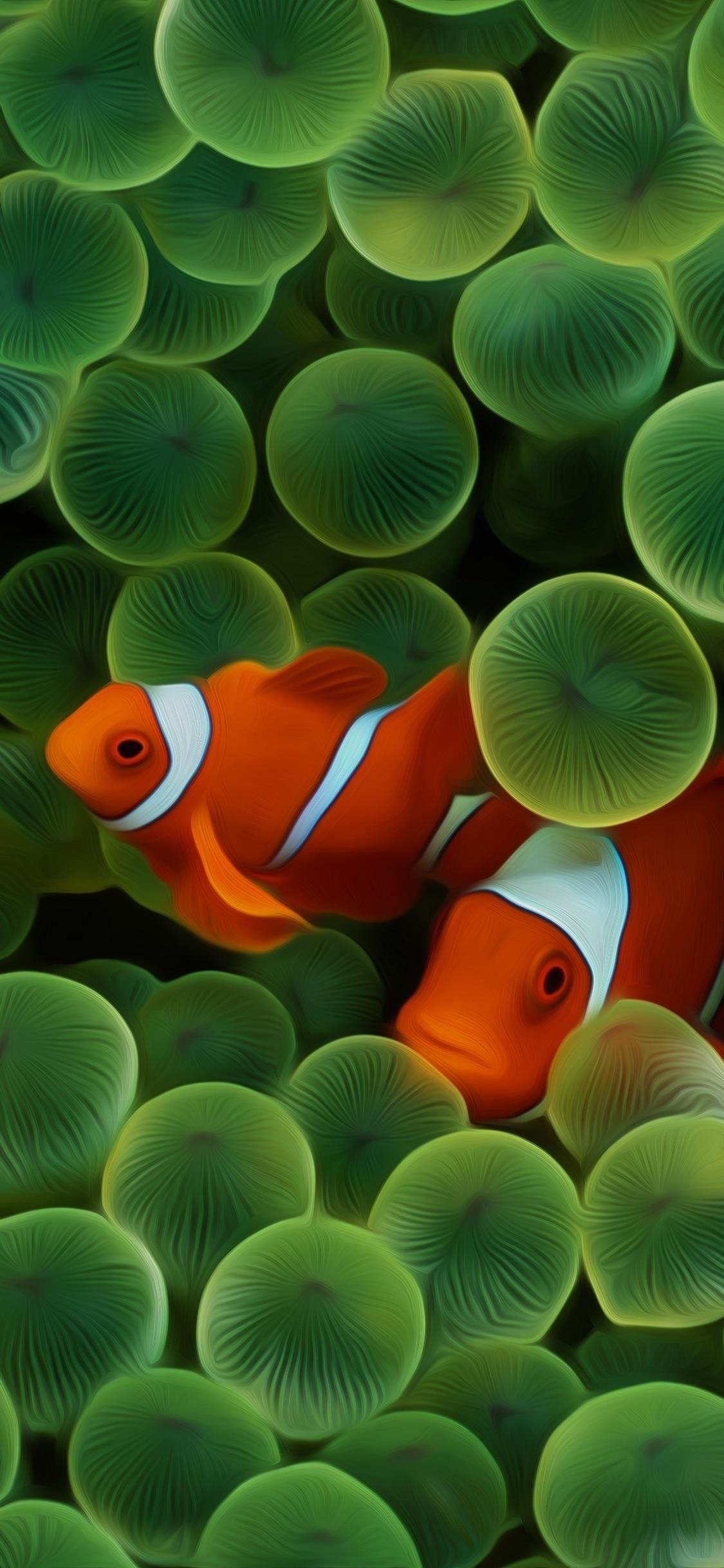Clownfish Hd Original Ios 11 Iphone X Apple Wallpaper