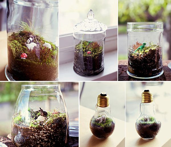 mini-terrariums.
