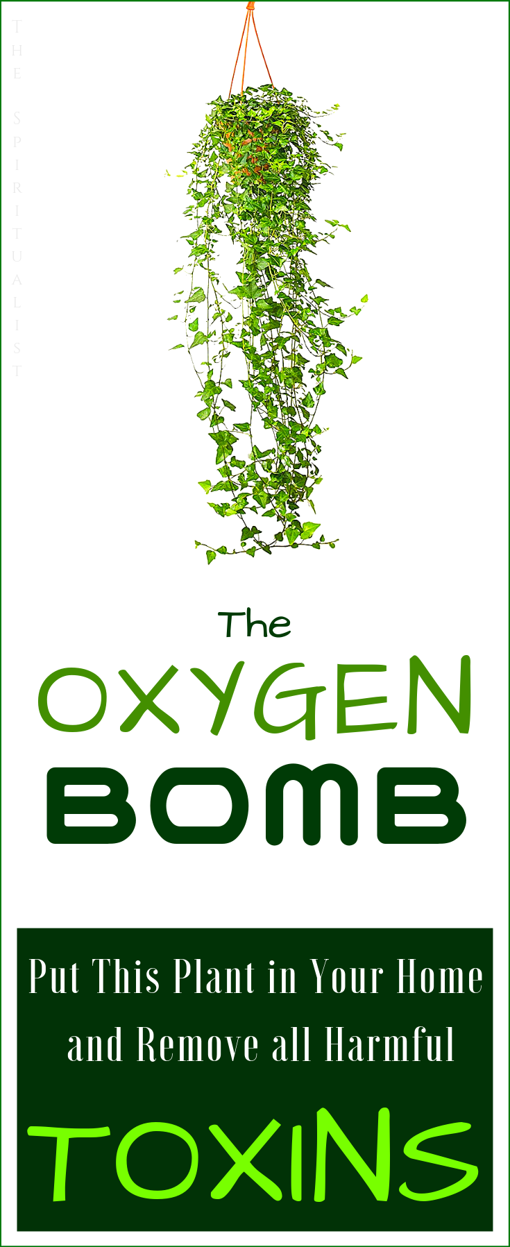 The MOST POWERFUL Oxygen Bomb Place This Plant in Your Home and Remove All Harmful Toxins