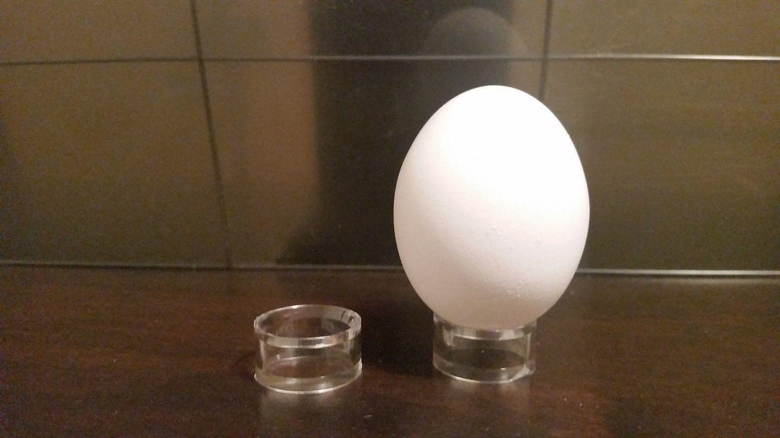 """100 Round Medium 1"""" Display Stand Dove Pigeon Quail Chicken Ostrich Emu Eggs"""