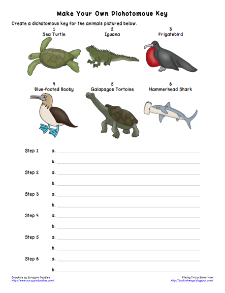 All Worksheets » Dichotomous Key Worksheets - Printable Worksheets ...