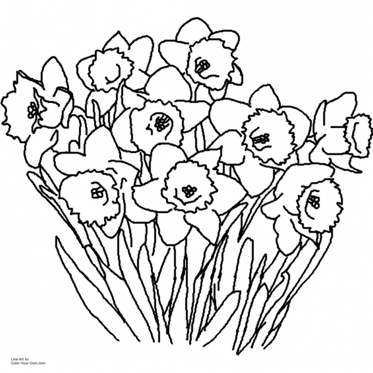 Narcissus Flower Coloring Pages | Cartoon | Pinterest