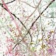 Fototapeta - Kolorowe Abstrakcyjne Grunge Blossom