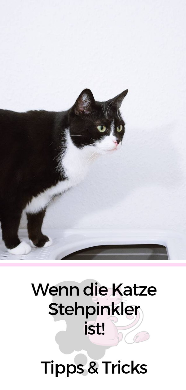 Pin von Laura Mayer auf Cats | Katzenklo schrank, Katzen klo