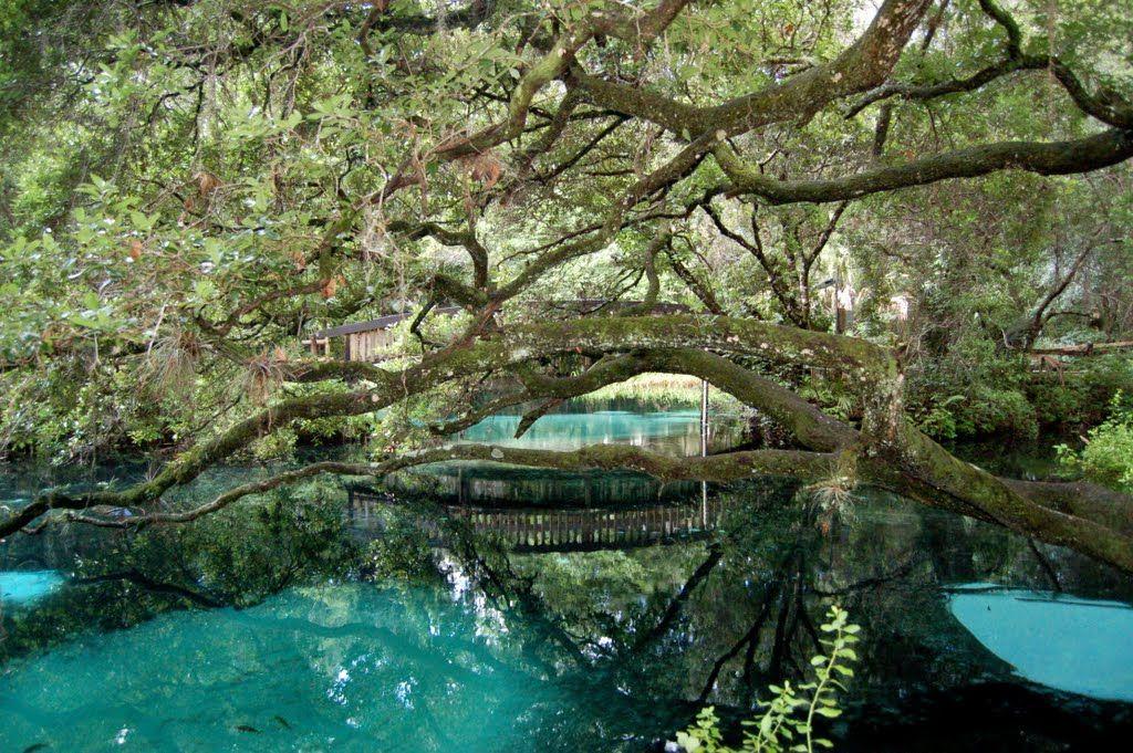 fern hammock at juniper springs ocala national forest fern hammock springs   juniper springs florida black bear scenic      rh   pinterest