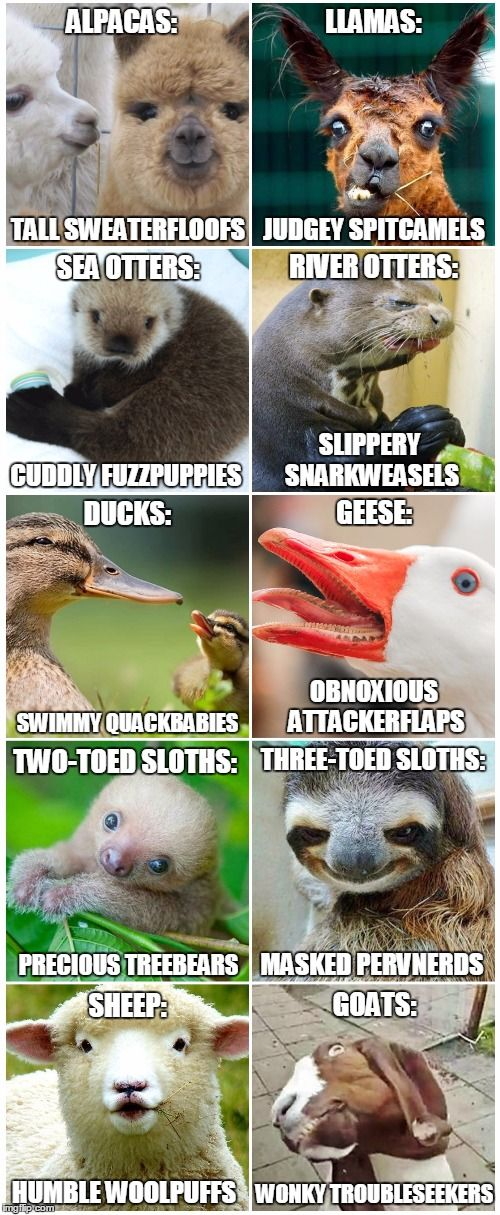 Animals that are similar, yet so very different... Funny