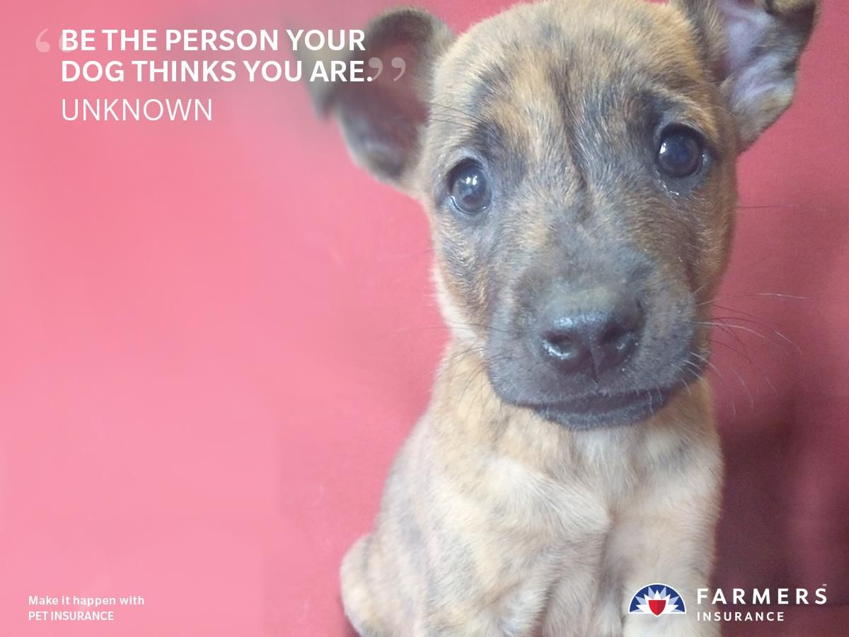 Because Your Pets Bring You Happiness You Can Do Your Part To Make Sure They Re Happy And Healthy Too Farmers Embrace Pet Insurance Dog Insurance Sick Pets