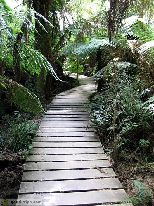 More jungle walkways.