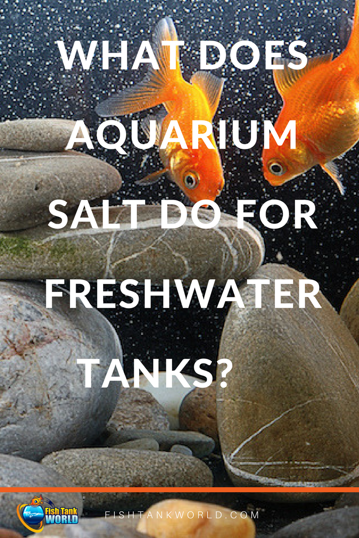 What Does Aquarium Salt Do For Freshwater Tanks Fish Tank World Betta Fish Care Fish Tank Tropical Fish Aquarium