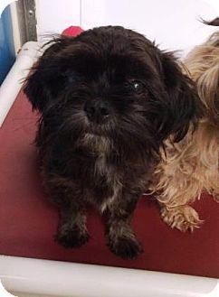 Bryan Tx Shih Tzu Mix Meet A Dog For Adoption Http Www