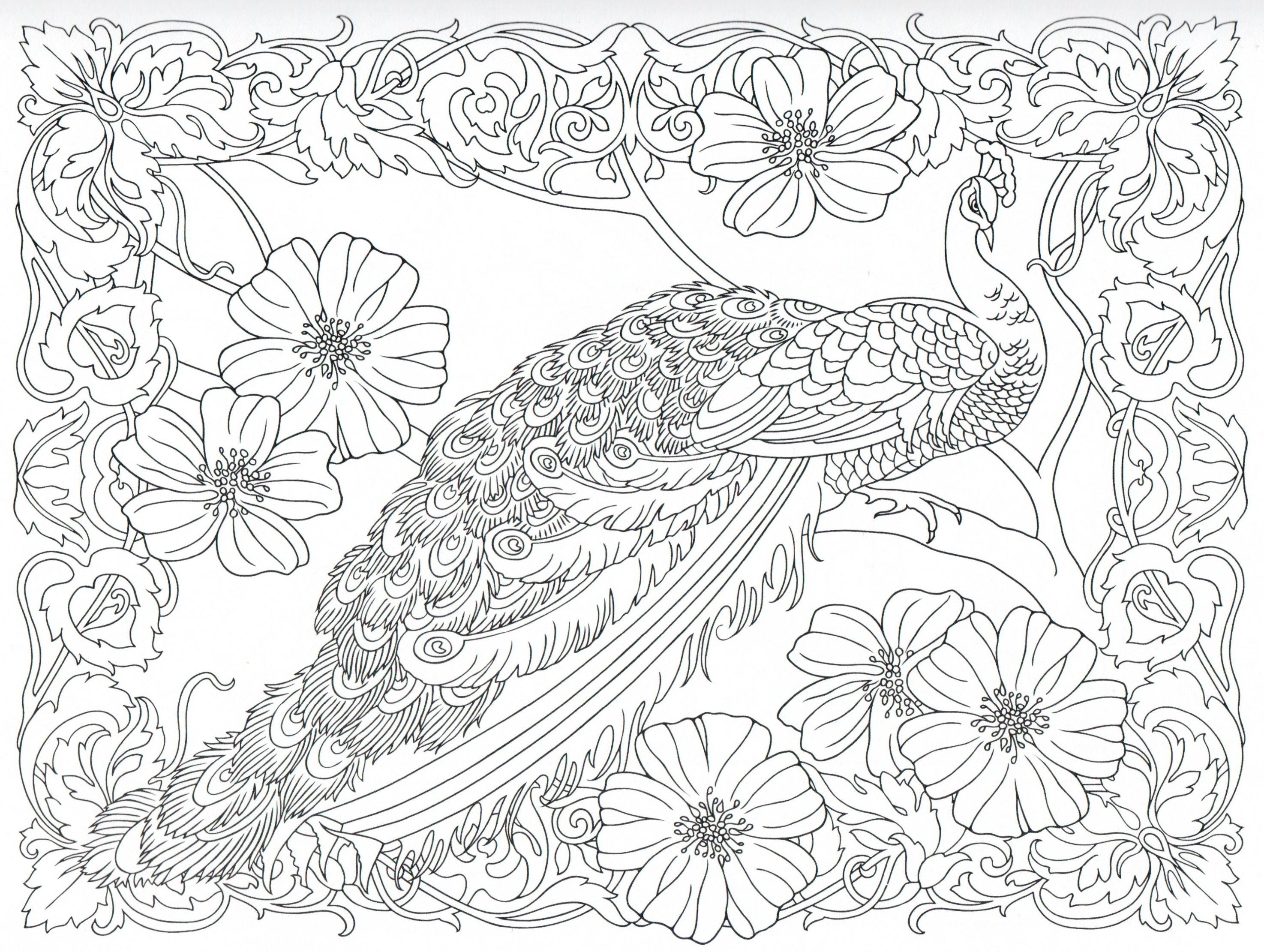 Peacock coloring page 25 31 color pages stencils for Peacock crafts for adults