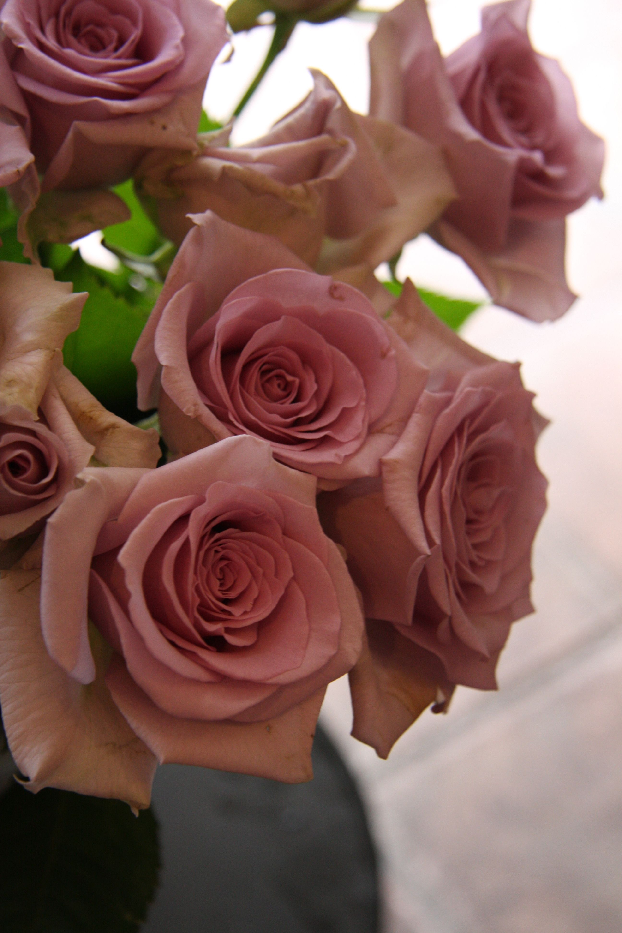 There Should Always Be Pink Roses Abundant Beauty Pinterest
