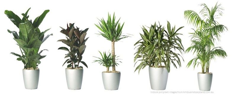 Top 5 plants for your home that create oxygen, clear the ...