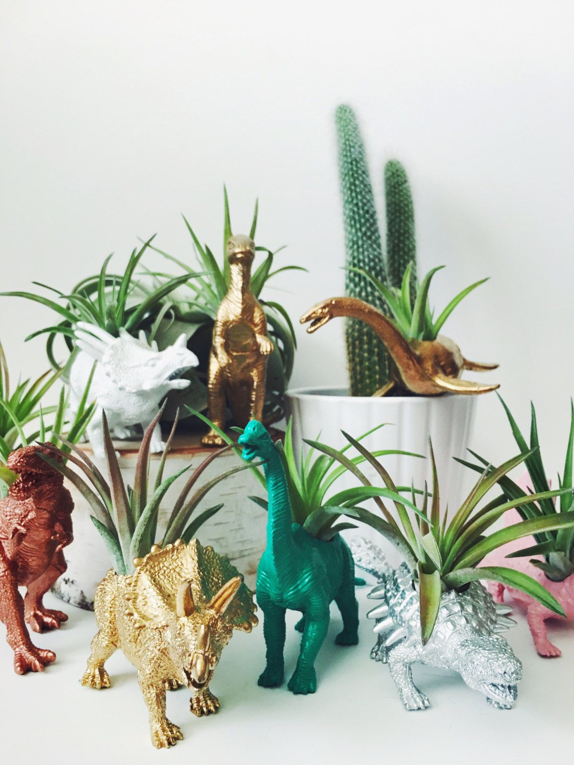 Customize your own small dinosaur planter with air plant for Indoor plant gift ideas
