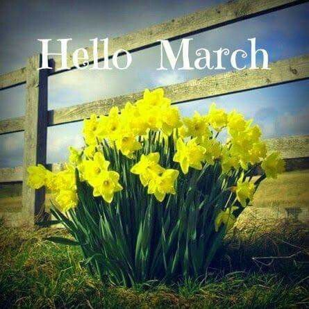 Image result for welcome march daffodils
