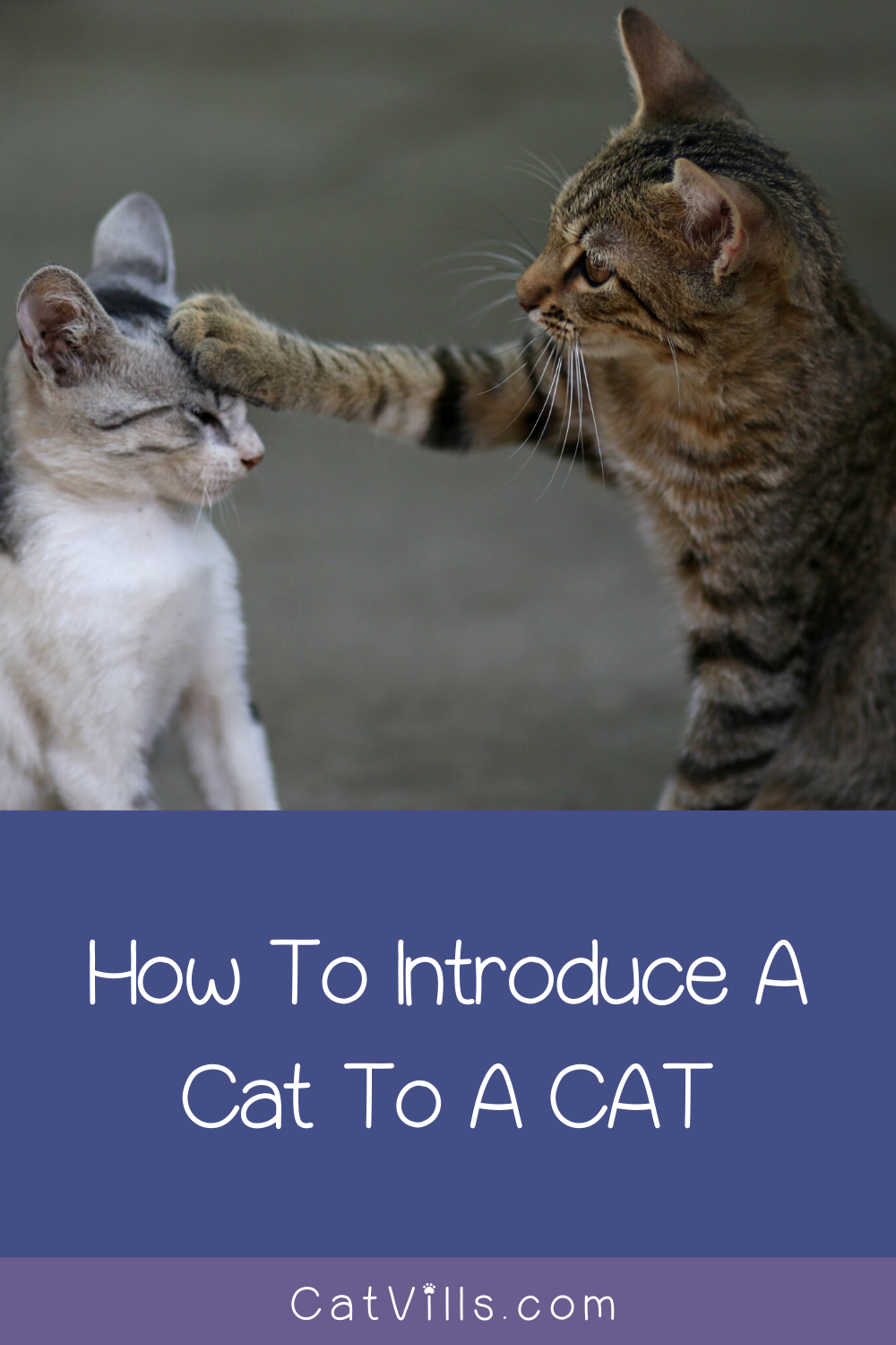 How To Introduce A Cat To A Dog And To Another Cat In 2020 Cats Dogs Cats And Kittens