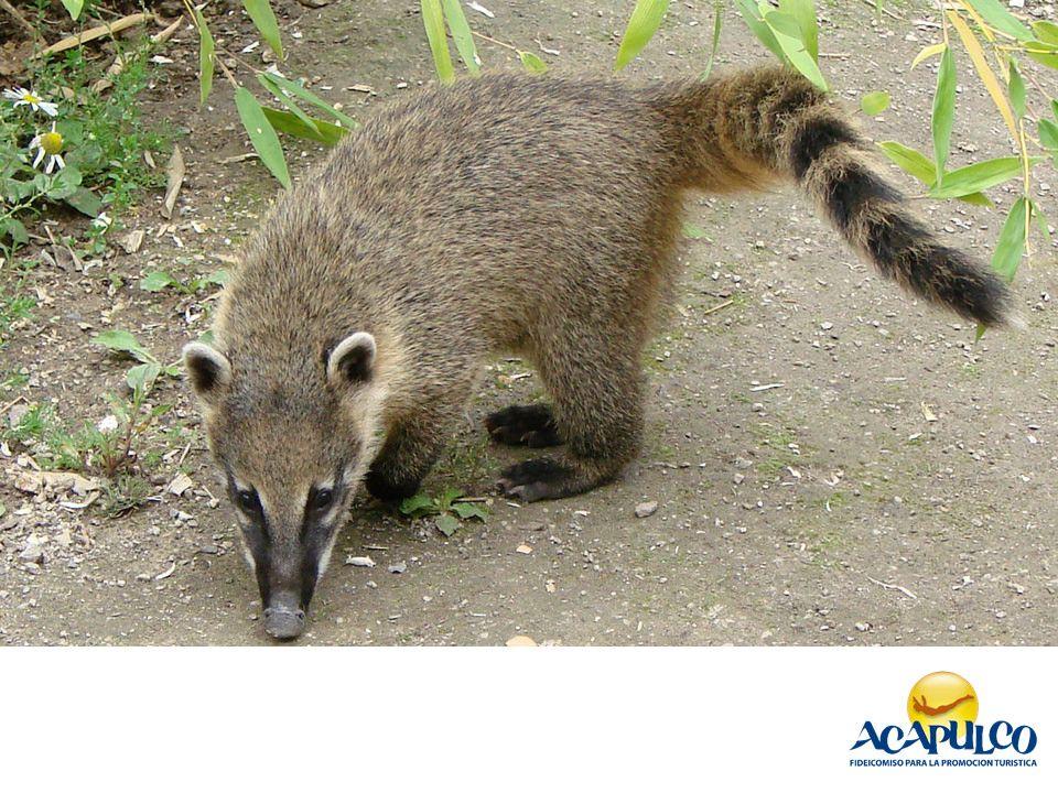 La Increible Fauna En Acapulco Informacion Sobre Acapulco 2