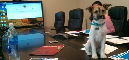 7 Companies with K9 CEOs: That's Canine Executive Officer to You
