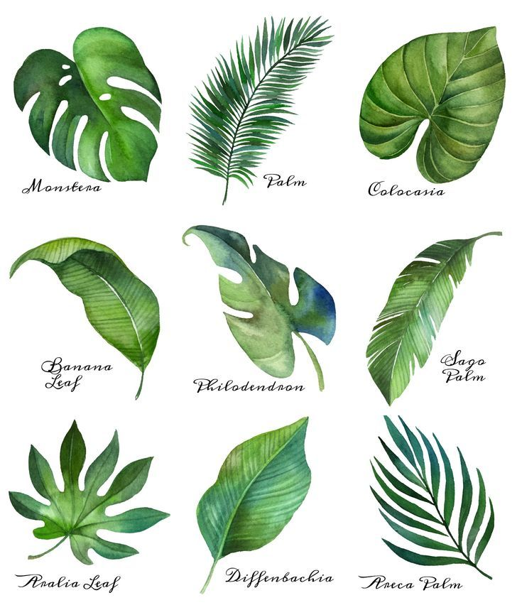 Tropical Leaf Free Printable Art {Series of 9