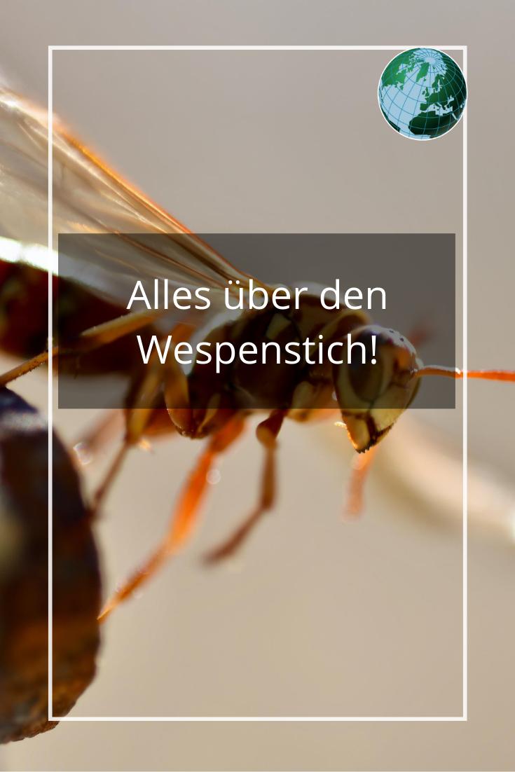 Sterben Wespen Wenn Sie Stechen