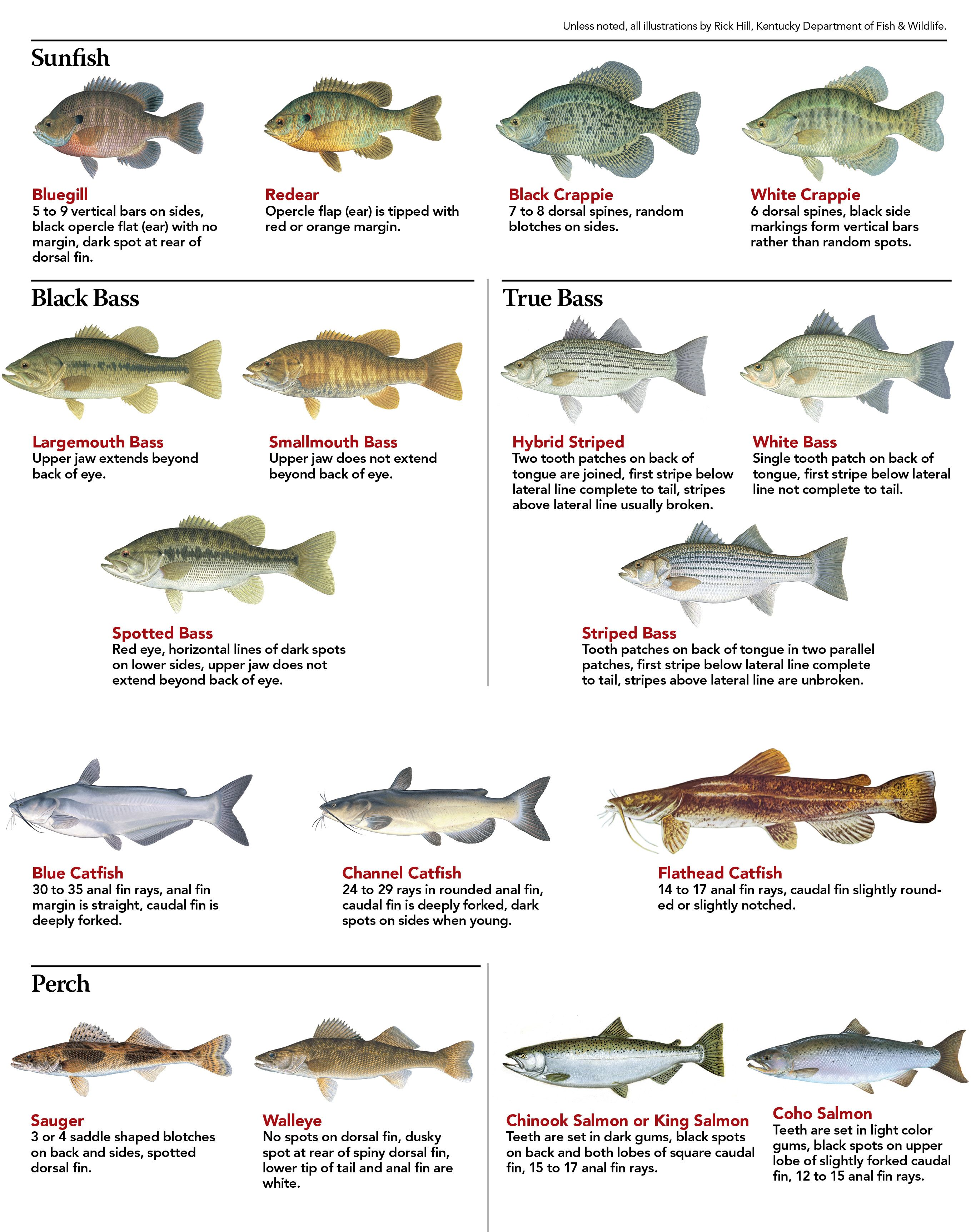 Indiana fish chart pictures to pin on pinterest pinsdaddy for Fish in indiana