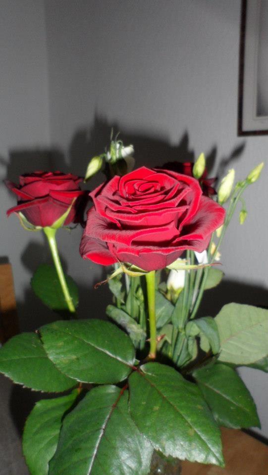 3 röda rosor!